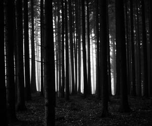 forest, trees, and indie image