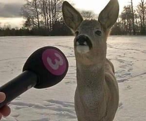 funny, animal, and deer image