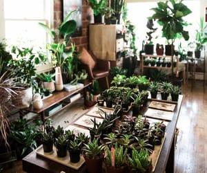 apartment, plants, and urban jungle image