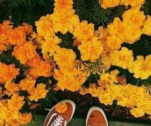 flowers, vans, and yellow image