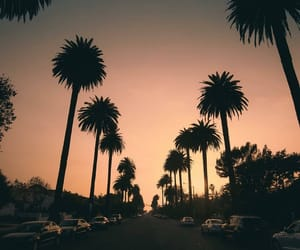 california, los angeles, and palmtrees image