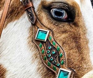 blue eyes, horse, and horses image
