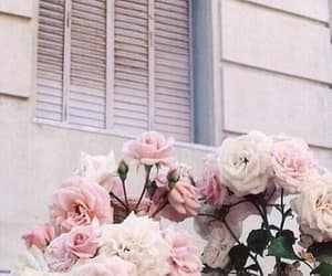 aesthetic, estético, and pink image