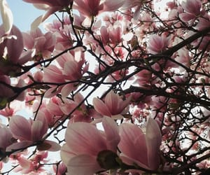 beauty, flowers, and magnolia image