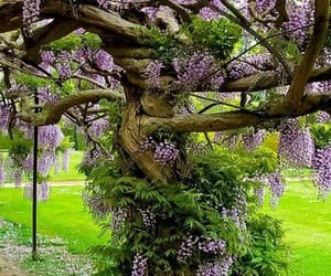 arbol, belleza, and flores image