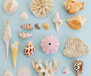 ocean, water, and shells image