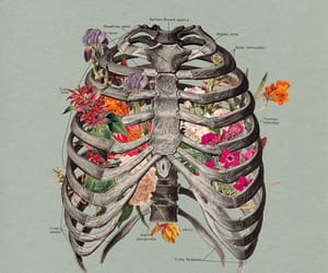 flowers, bones, and skeleton image