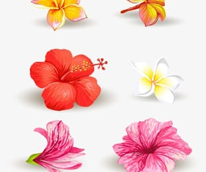 bright, colorful, and flowers image