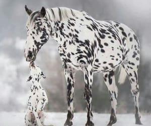 horse and dog image