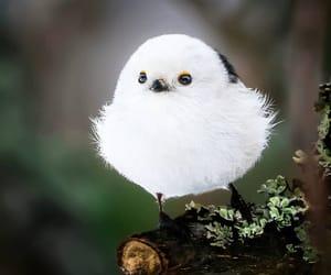 bird, animal, and cute image