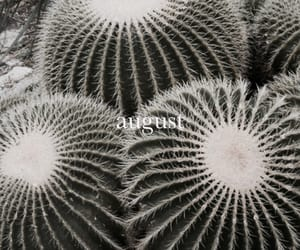 cactus, theme, and plants image