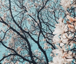 flowers, spring, and sky image