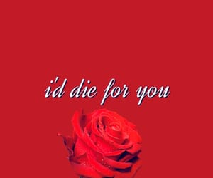 red, quotes, and rose image