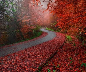 nature, autumn, and red image