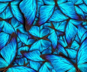 butterfly, pattern, and background image