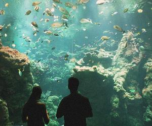 fish, aquarium, and photography image