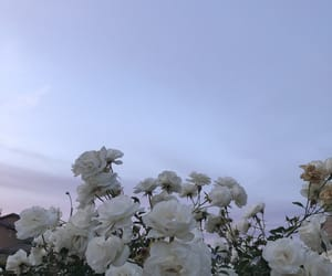 aesthetic, baby blue, and flowers image