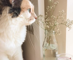 cat, aesthetic, and flowers image