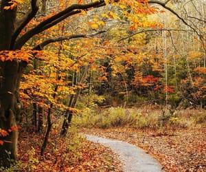 autumn, colours, and nature image