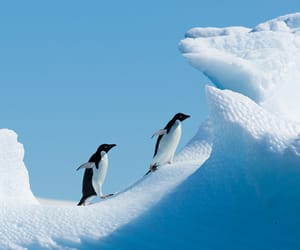 trip to antarctica and air-cruise image