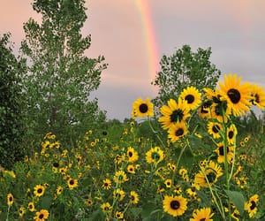flowers, rainbow, and sunflower image