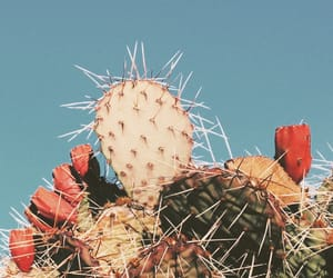 cactus, plants, and vintage image
