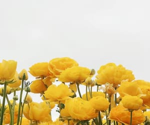 blooms, flower, and flowers image