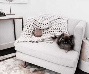 dog, interior, and home image