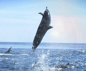 animals, beautiful, and dolphin image