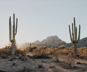 cactus, desert, and nature image