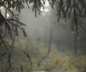 rain, forest, and nature image