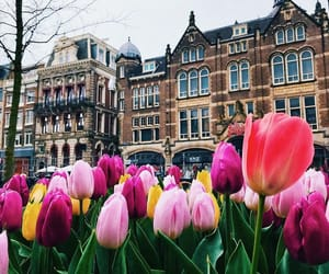amsterdam, flowers, and places image
