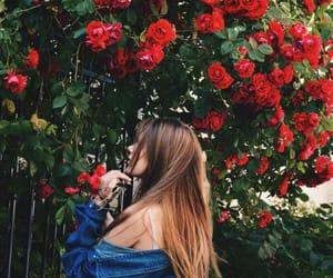 beautiful, roses, and coachella image