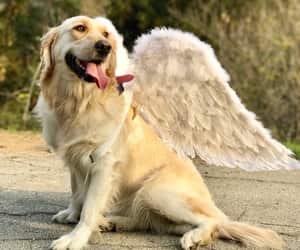 wings, chica, and angel image