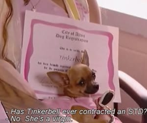 dog, funny, and paris hilton image