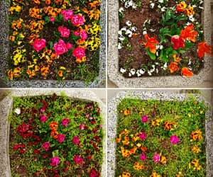 flower, flowerpot, and flowers image