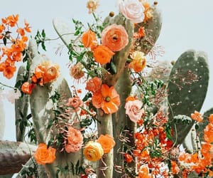 flowers, cactus, and orange image