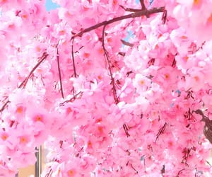 japan, spring, and Sunny image