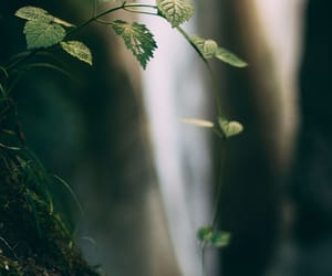 forest, leaves, and fresh image