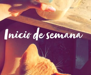 cafe, lunes, and gato image