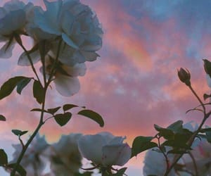 flowers, sky, and aesthetic image