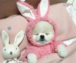 pink, dog, and kawaii image