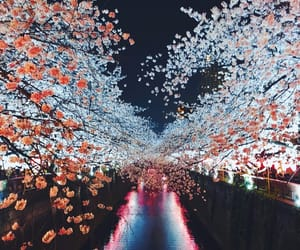 blogger, view, and cherry blossoms image