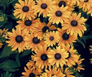 beautiful, pretty, and sunflower image