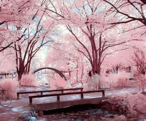 pink, japan, and korea image