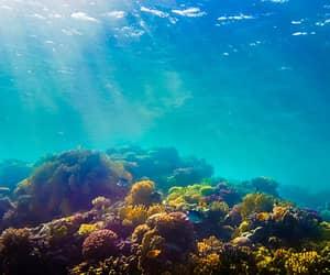aqua, nature, and underwater image
