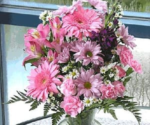 color burst, send flowers online, and pink gerber daisies image