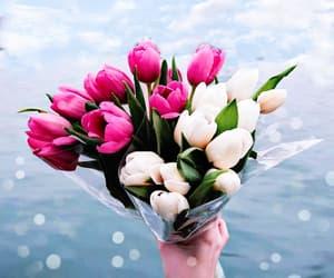 tulips and beautiful image