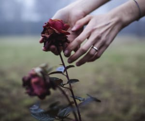 hands, rose, and flowers image