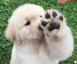 dog, cute, and paw image